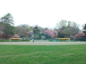 円山公園花見