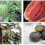 のびのば自然農園で皆で育てた野菜や果物